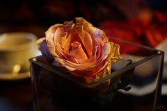 Mittwochs Rose