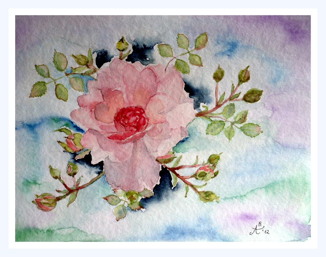Mittwochs- Rose