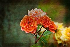 Mittwochs Rosen