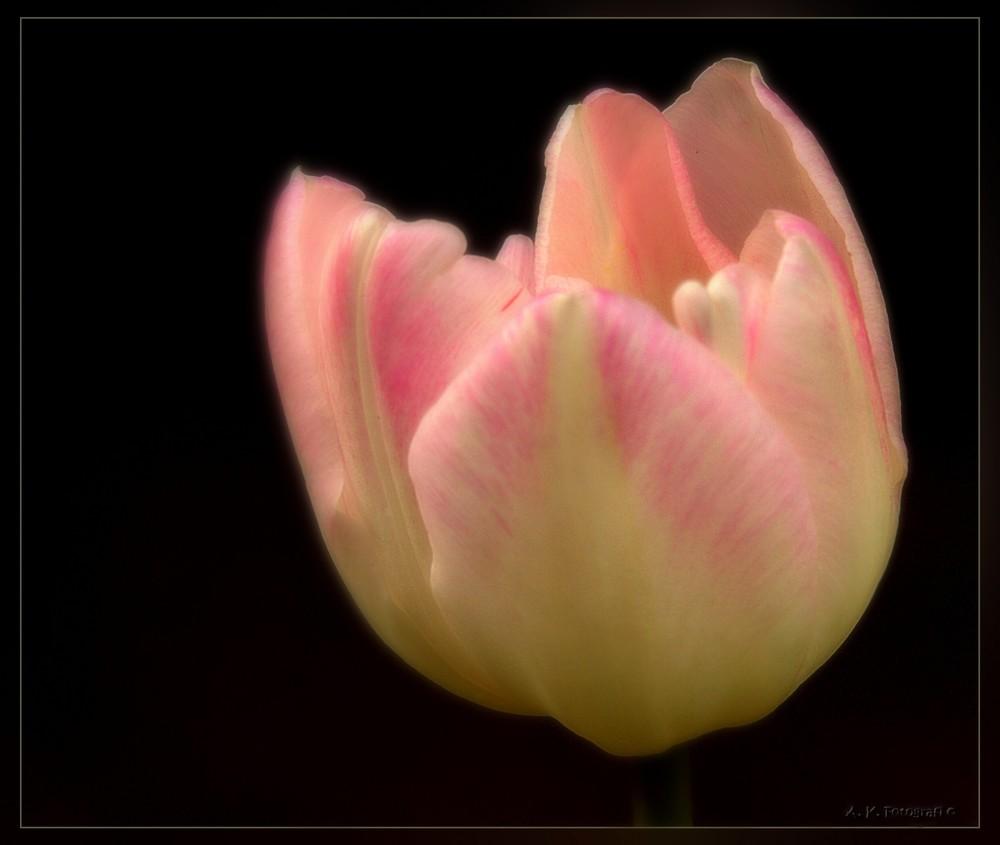 Mittwochsblümche !!!!