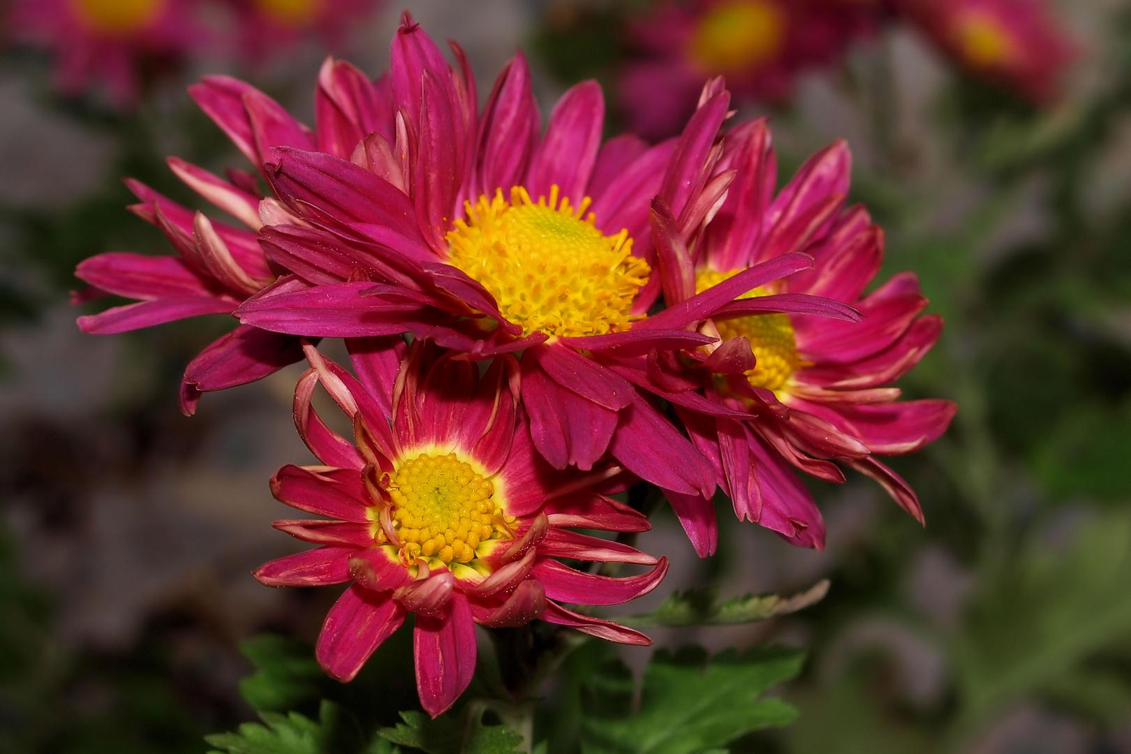 Mittwochsblümchen...