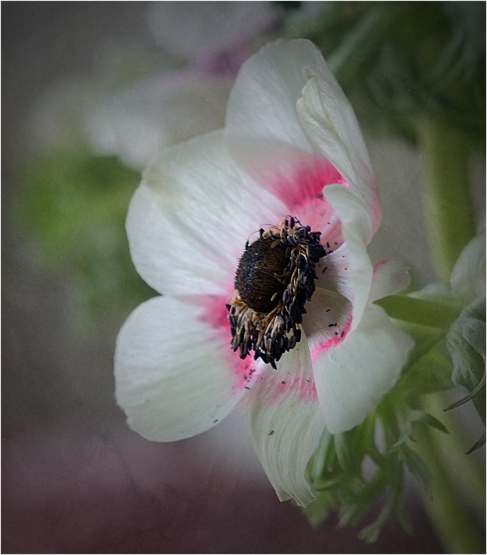 ~~Mittwochsblümchen 10~~