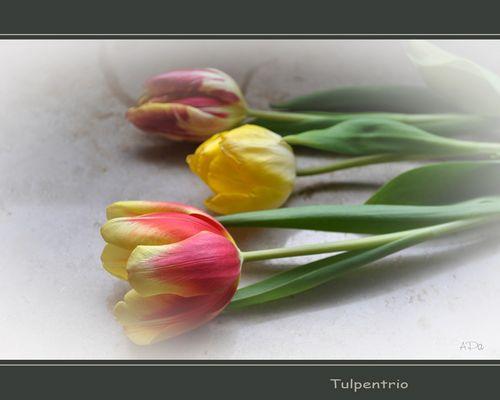 **Mittwochsblümchen**