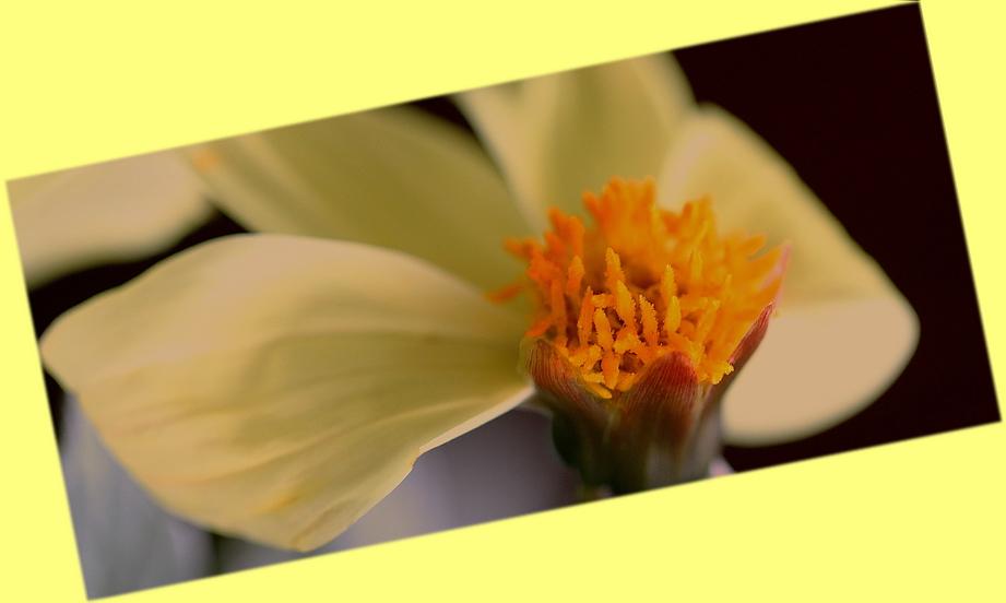 Mittwochsblümchen*