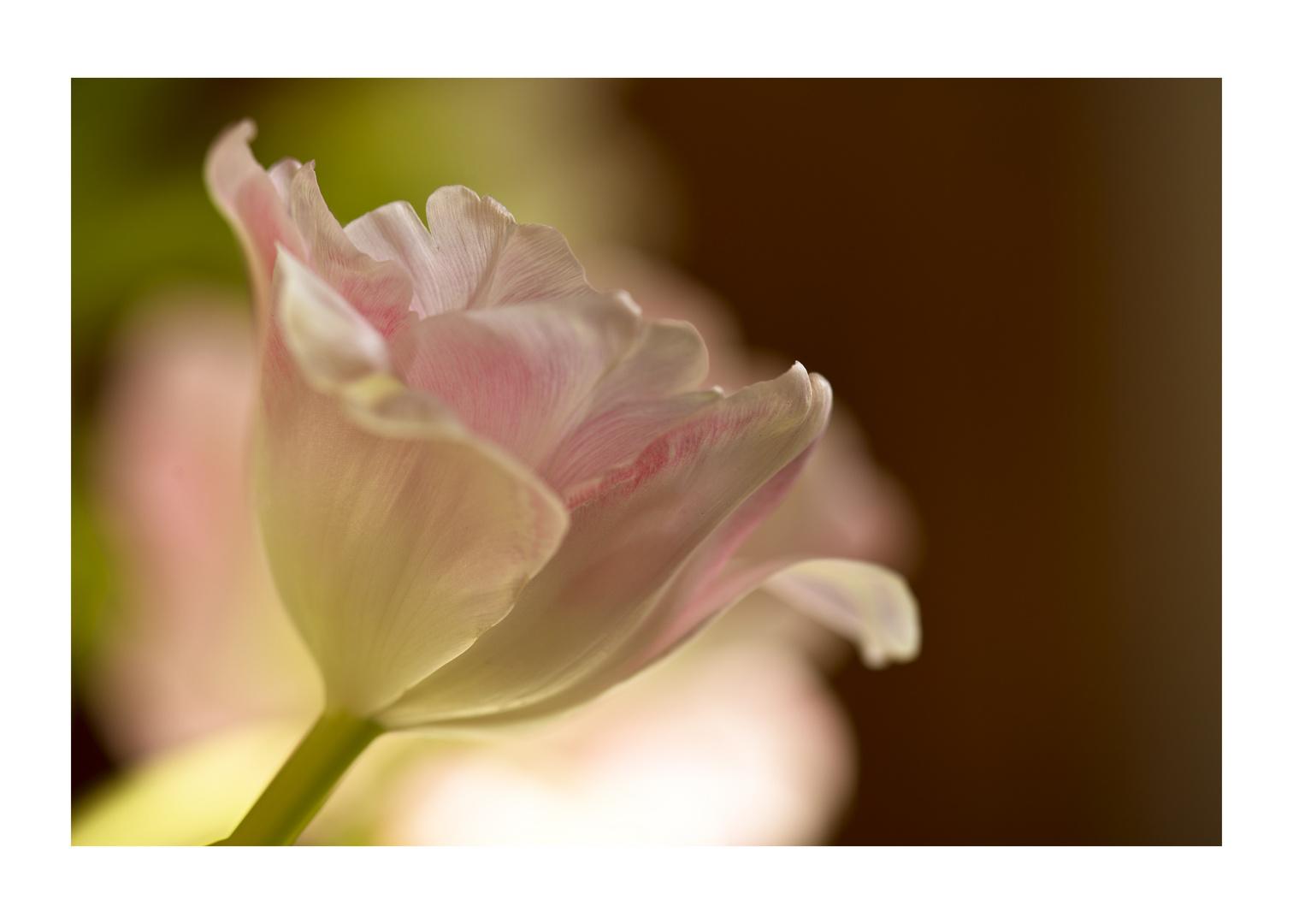Mittwochsblümchen....