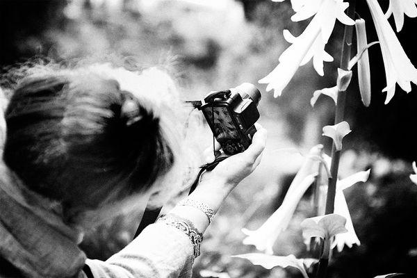 Mittwochsblümchen fotografieren lassen
