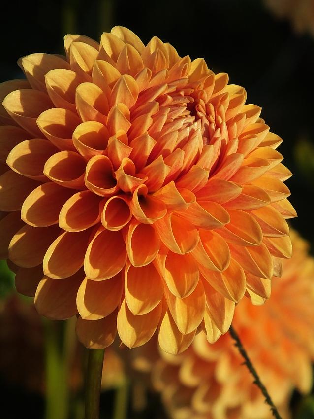 Mittwochsblümchen für Judith