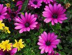 Mittwochsblümchen - Gruss