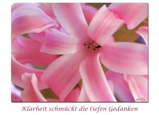 Mittwochsblümchen -Hyazinthenblüte