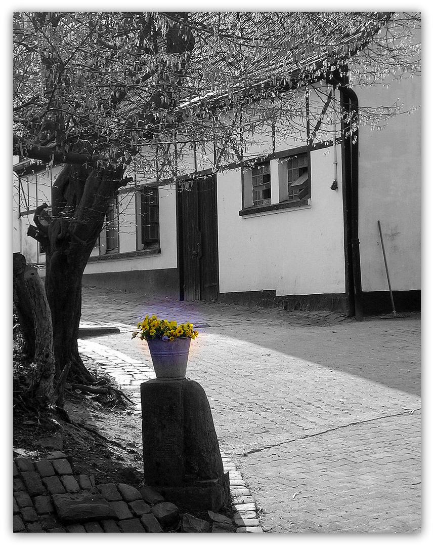 Mittwochsblümchen im Eimer :-)