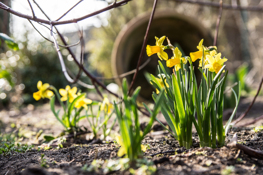 Mittwochsblümchen im Frühling
