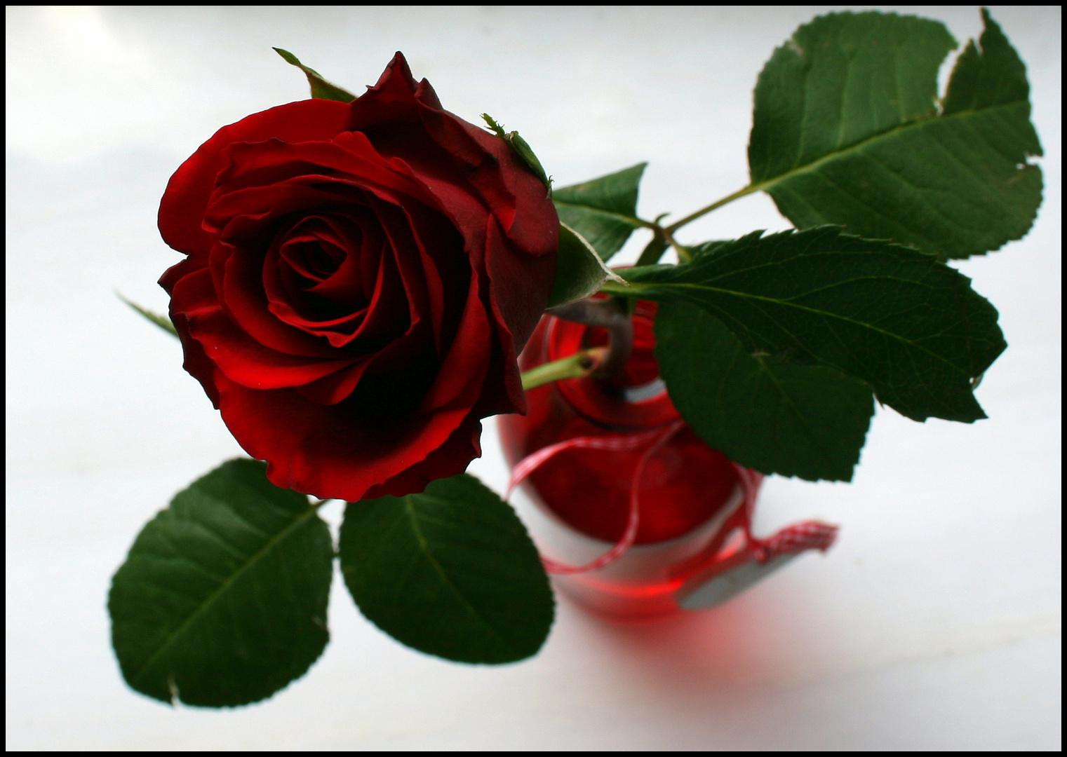 Mittwochsblümchen- Rose in roter Vase von oben :-)