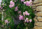 Mittwochsblümchen - sonnendurchflutet