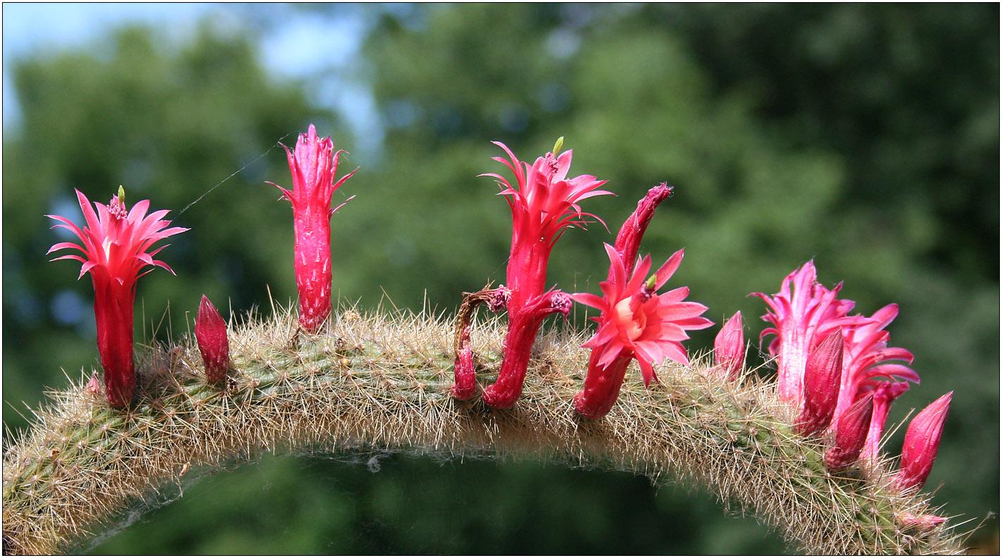 Mittwochsblütchen - Rot auf Grün!