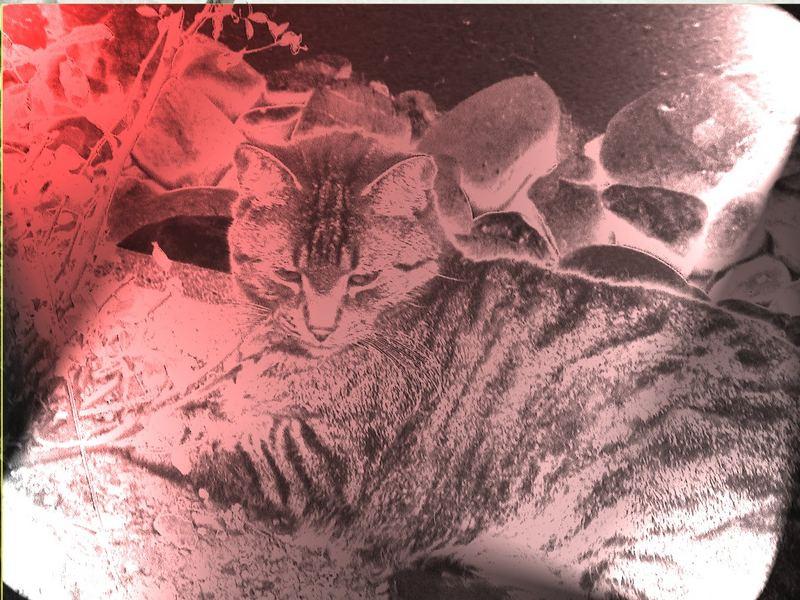 Mizi in Red und Chrom