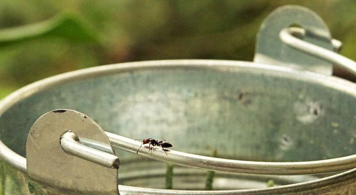""""""" Même la pensée d'une fourmi peut toucher le ciel. """""""
