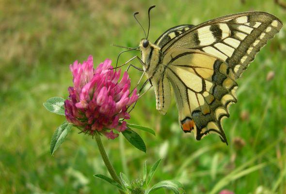 mmm... quel bon nectar !