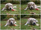 mmmmh...ich esse Äpfel für mein Leben gern !