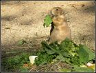 * Mmmm....lecker, ich liebe frischen Salat *