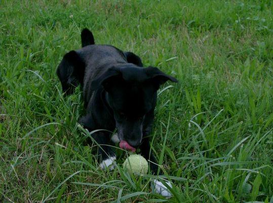 Mmmmmh mein Ball!!!