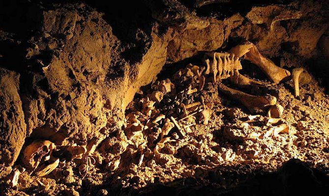 Moa (Dinornithiformes), Waitomo Caves, New Zealand