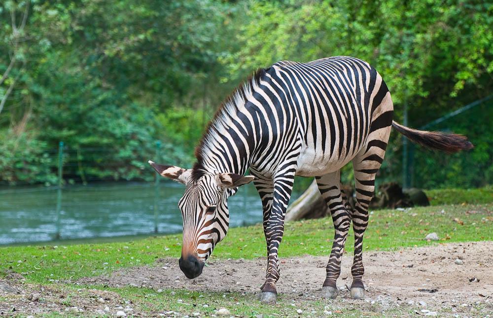 Mobiler Zebra-Streifen
