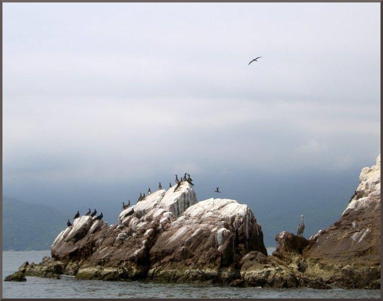 Mochima, Vögel auf Fels
