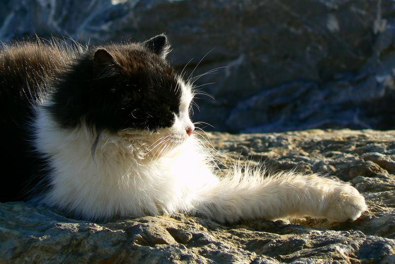 Moda beach cat having a sunbath...