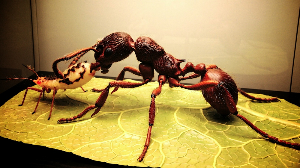 Modell einer Ameise