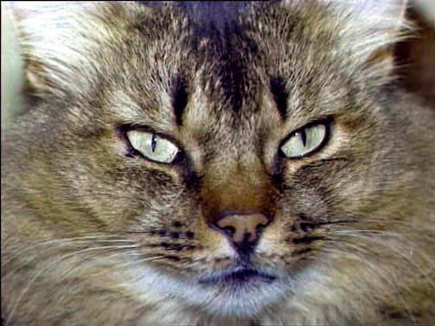 Modell - Katze