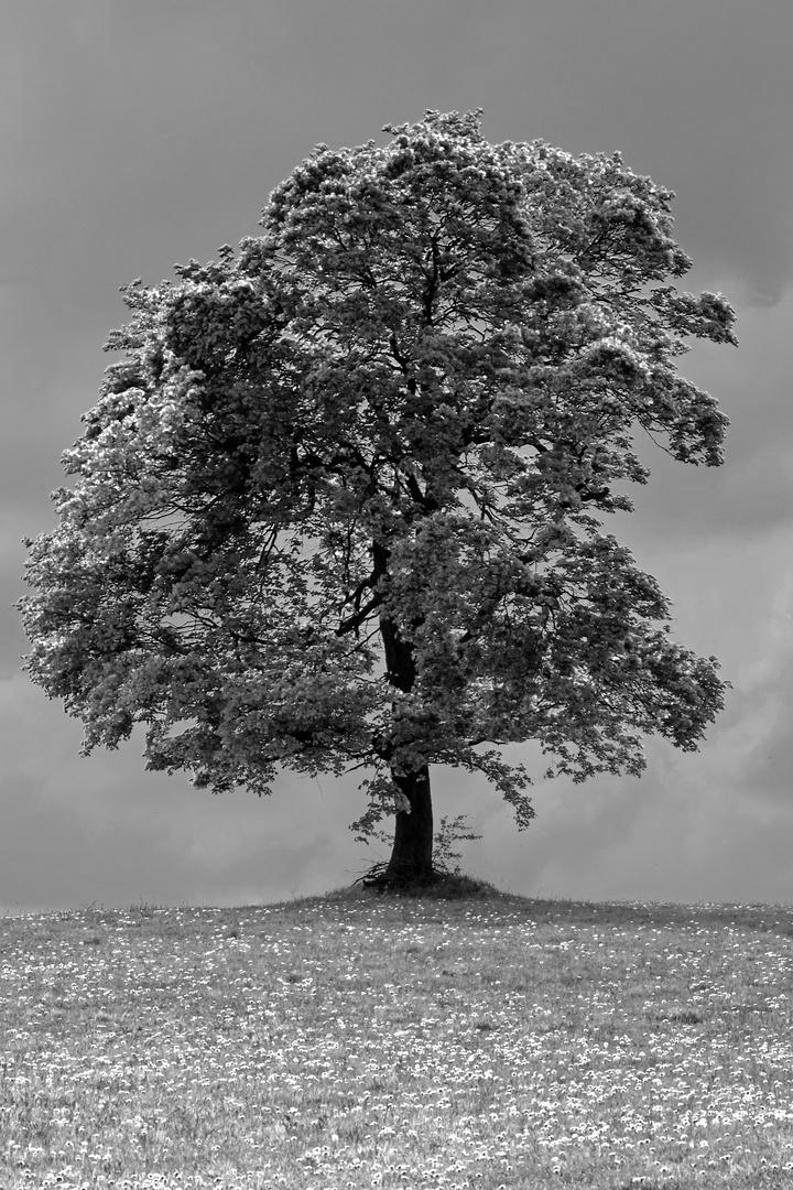Modellbaum