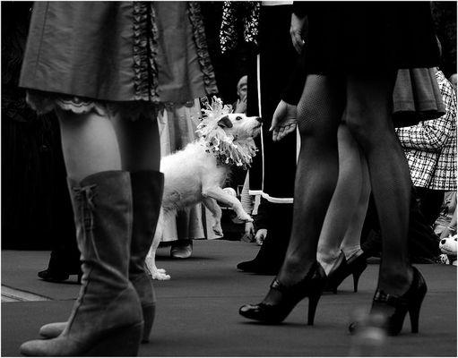 Modenschau mit Hund