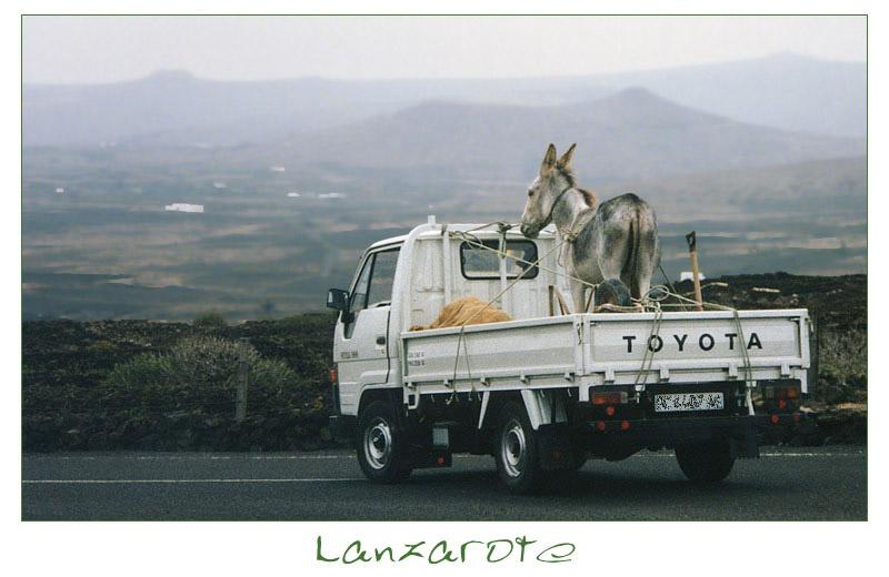 | | moderner Esel-Transport | |
