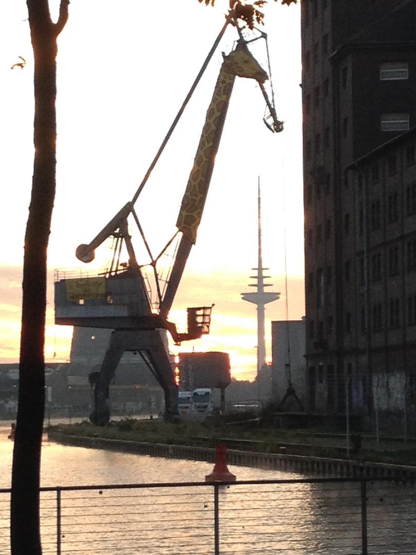 """""""Möhre"""" baut Giraffe am Hafen"""