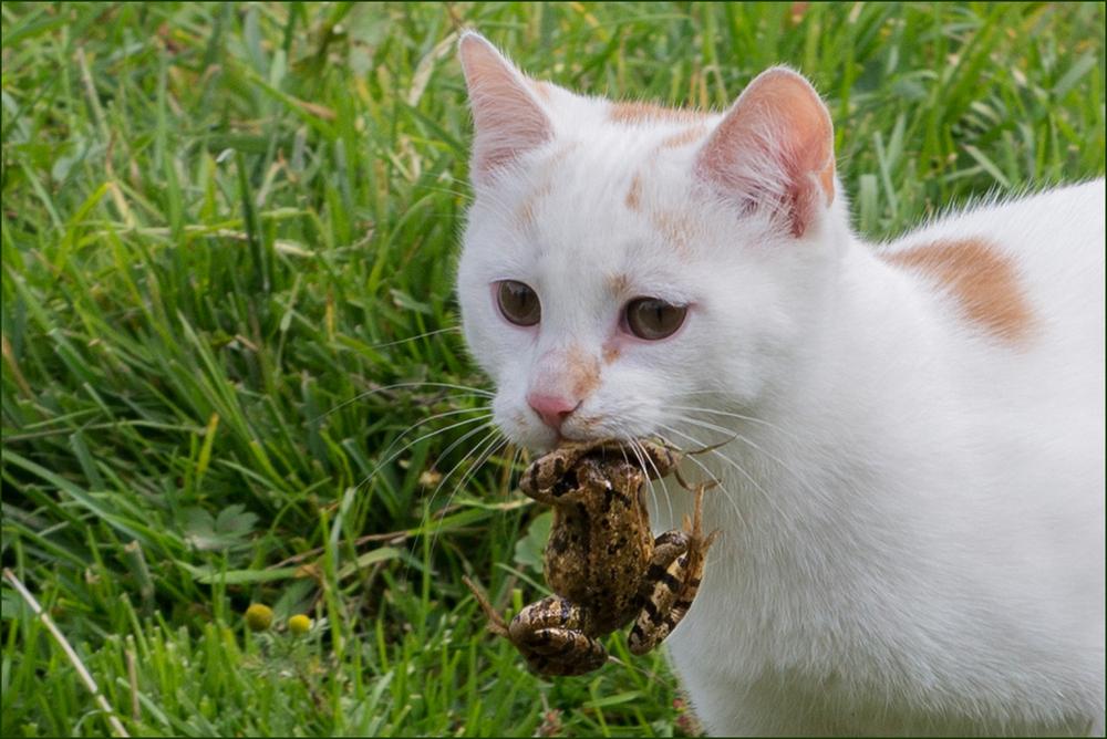 """""""mörderische Katze"""""""