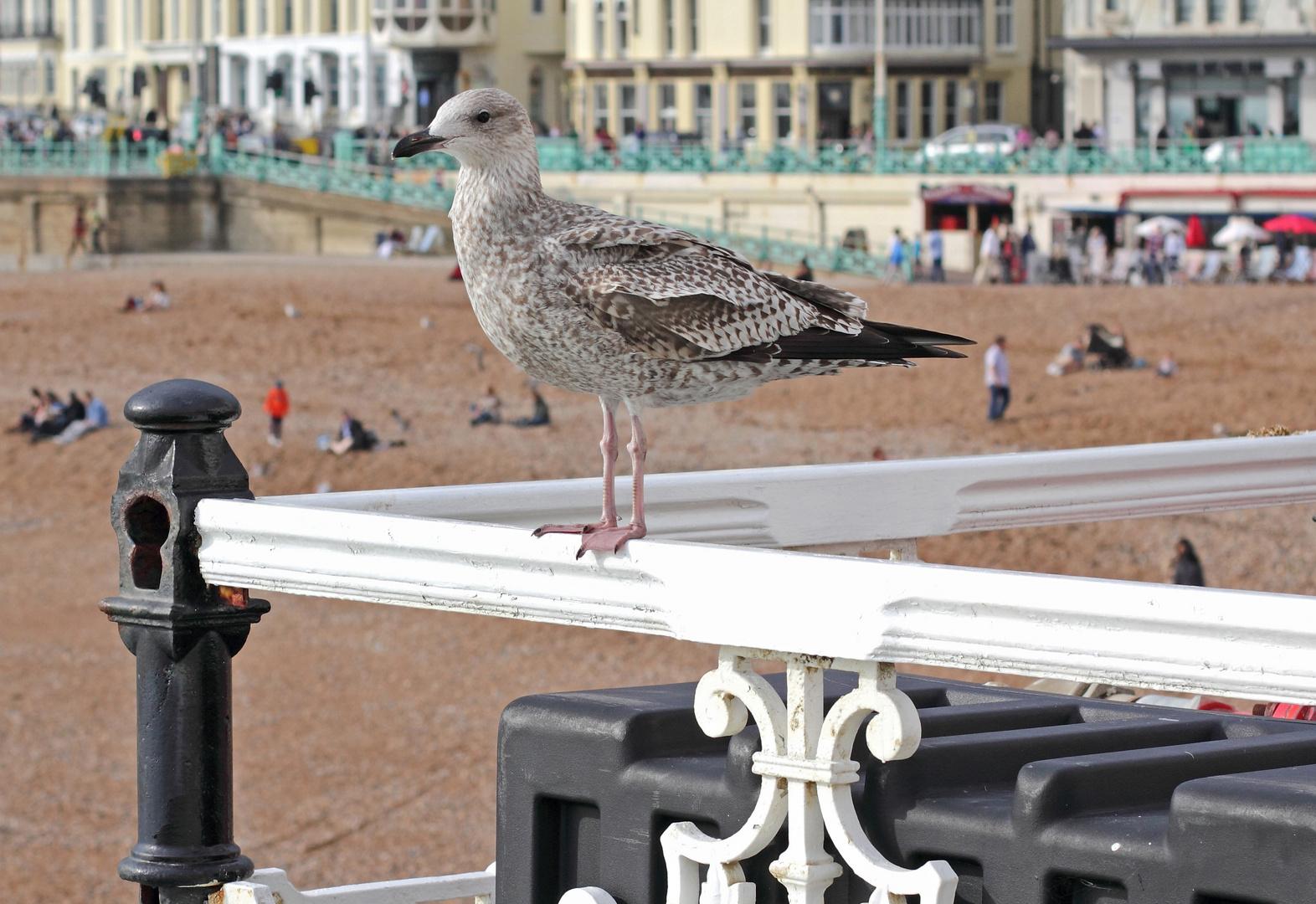 Möve Brightons