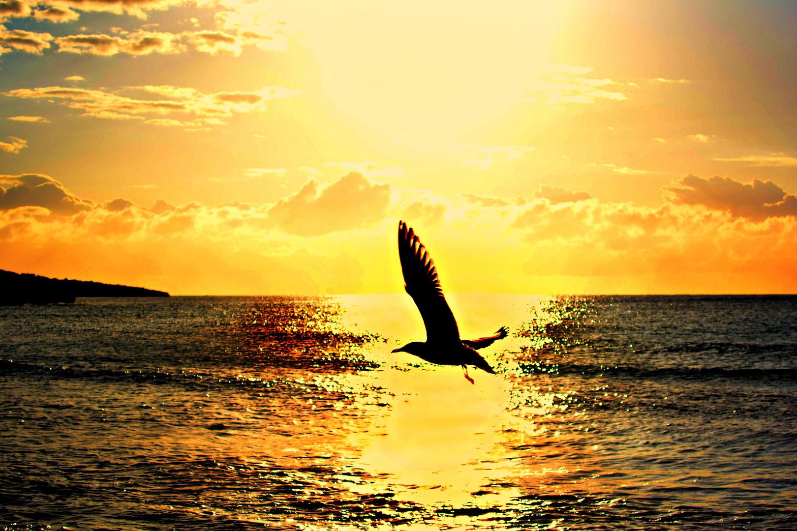 Möve fliegt zur Sonne
