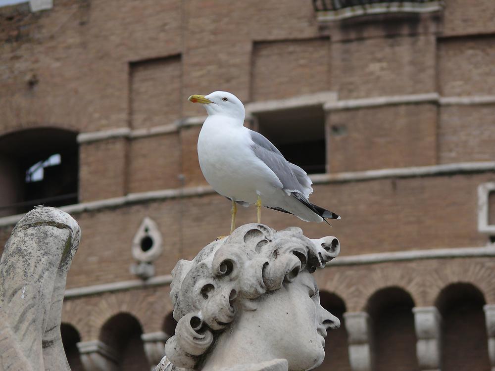 Möve in Rom
