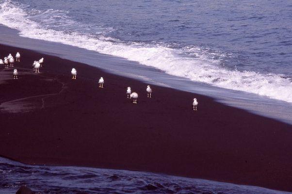 Möven auf schwarzem Sand