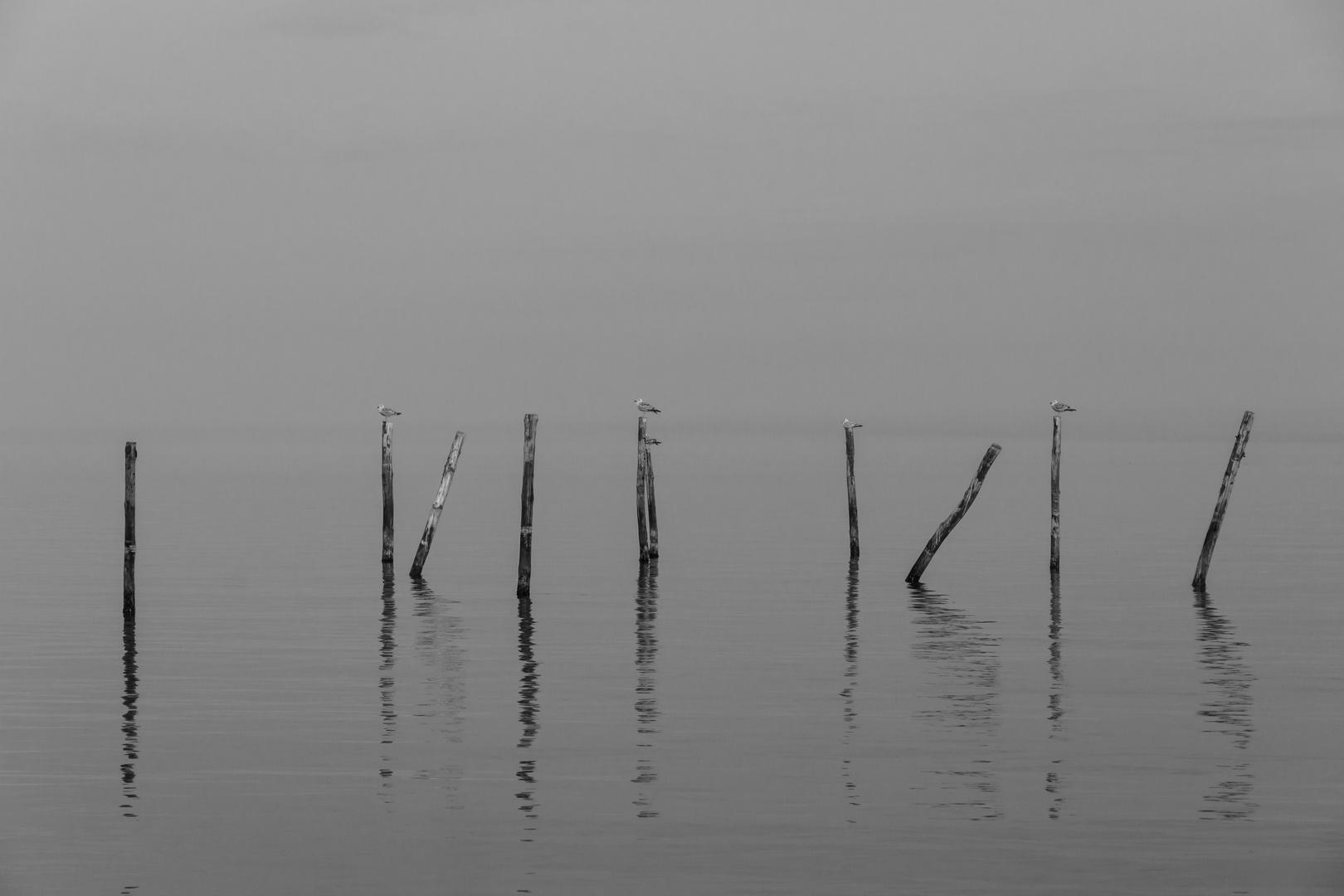 Möven im Seenebel