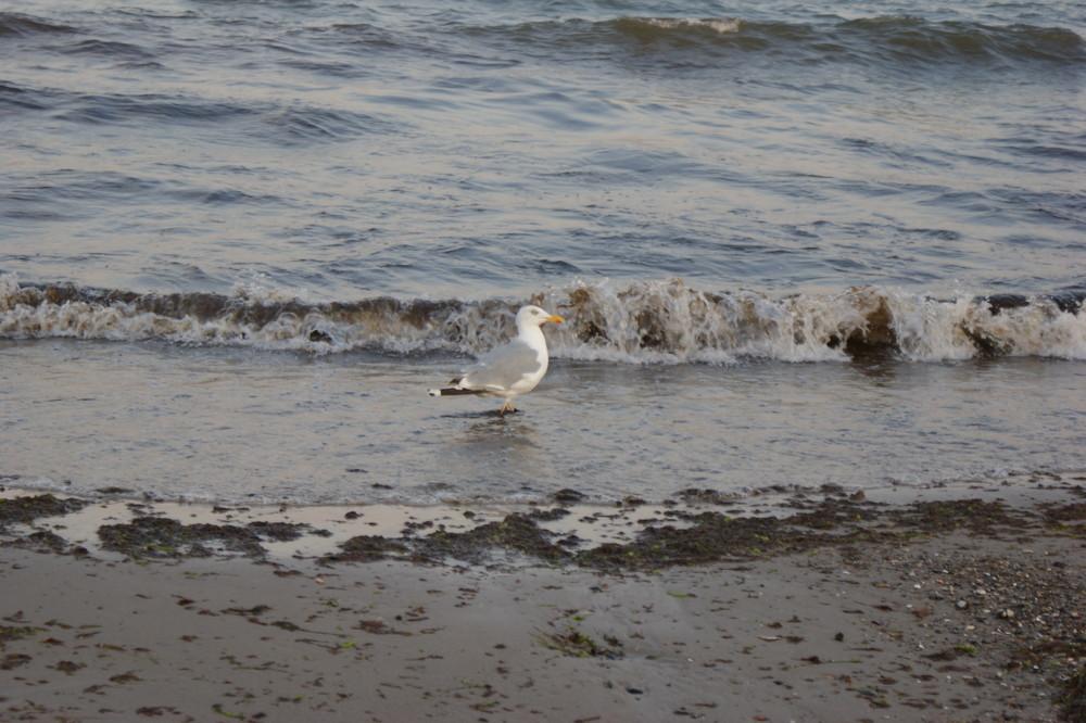 Möwe an der peitschenden Ostsee