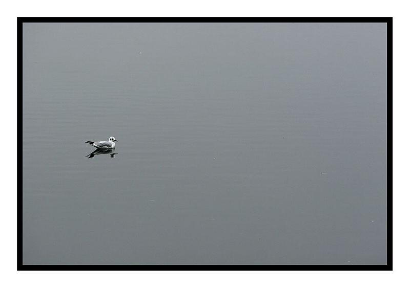 Möwe auf Baggersee