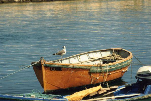 Möwe auf Boot