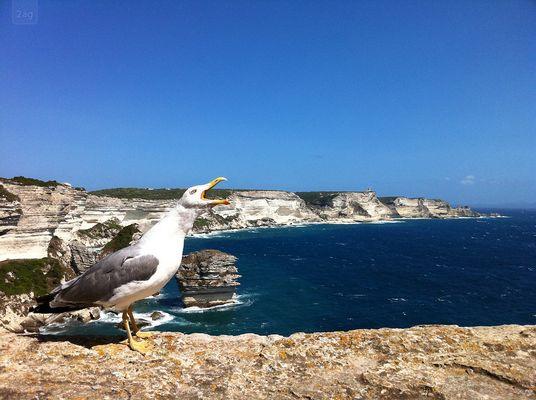 Möwe auf Korsika