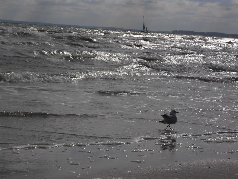 Möwe beim Sparziergang im Meer