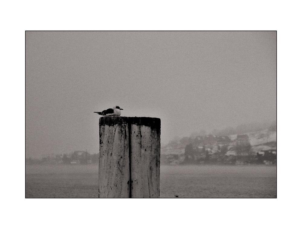 Möwe im Nebel