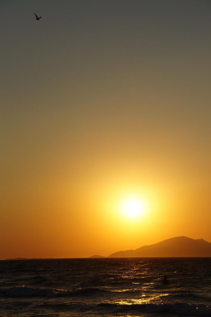 Möwe im Sonnenuntergang