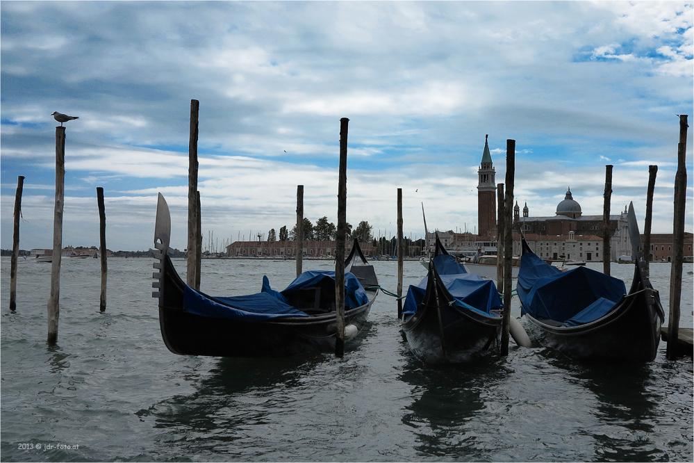 Möwe in Venedig