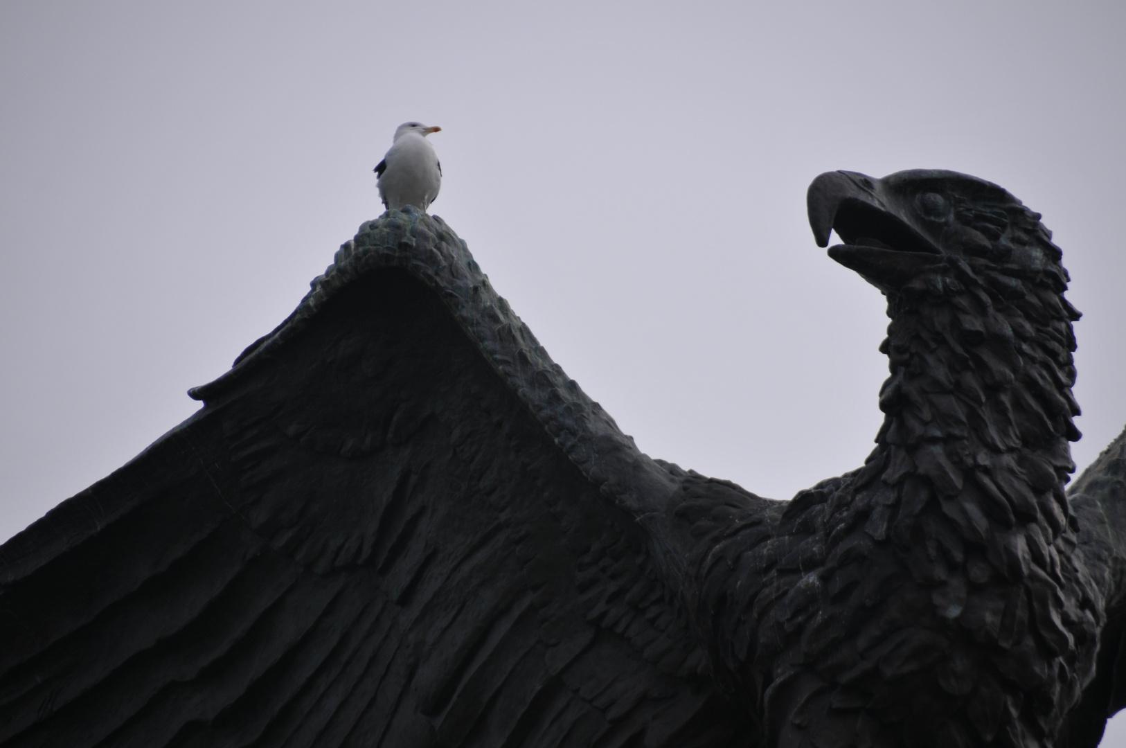 Möwe und Adler