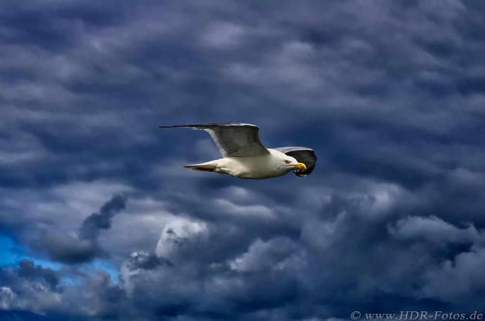 Möwe vor Wolkenhimmel